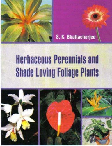 Herbaceous Perennials and Shade Loving Foliage Plants